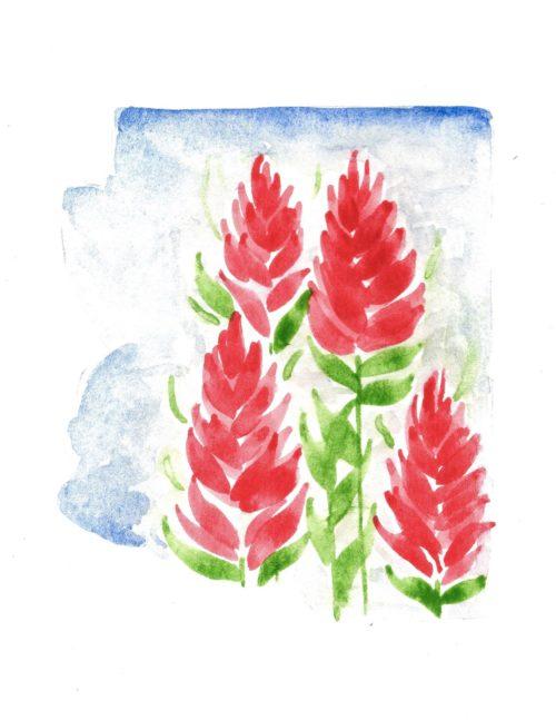 Arizona Indian Paintbrush