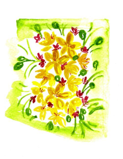 Arizona Palo Verde Bloom
